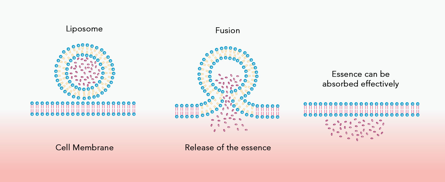Liposome Intensive Delivery Technology